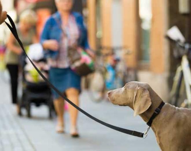 Edinburgh's top 10 dog-friendly pubs