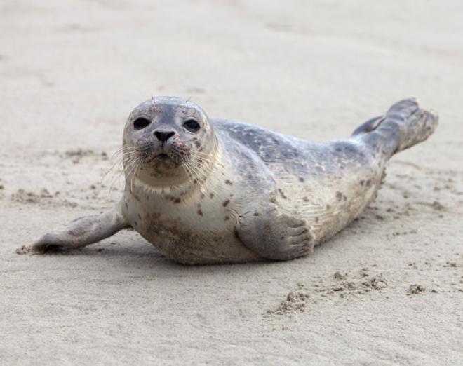 St Andrews Aquarium revisited